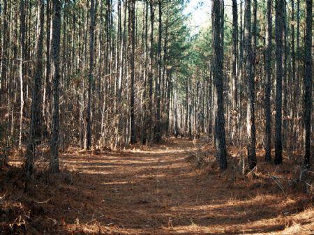 152ac Old Farm, Bolingbroke, Smarr : Bolingbroke : Monroe County : Georgia