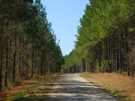 1704 Acre Timberland Tract : Whitmire : Laurens County : South Carolina
