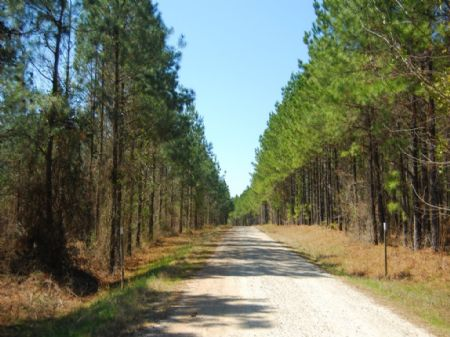 941 Acre Riverfront Timber Tract : Whitmire : Laurens County : South Carolina