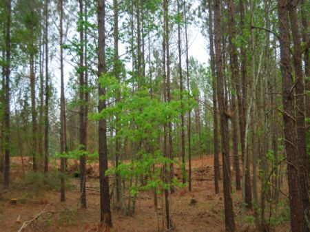 763 Acre Timberland Tract : Whitmire : Laurens County : South Carolina