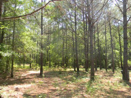 69 Acres : Autaugaville : Autauga County : Alabama