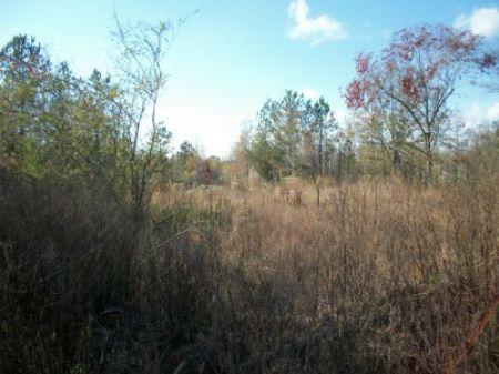 Ac229-80 Acres : Roanoke : Randolph County : Alabama