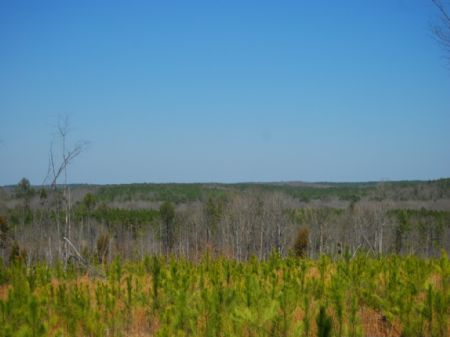 259 Acre Timberland Tract : Clinton : Laurens County : South Carolina