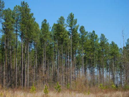172 Acre Timberland Tract : Clinton : Laurens County : South Carolina