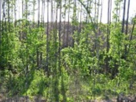 102 Acre Timber/ Recreation Tract : Chester : Chester County : South Carolina