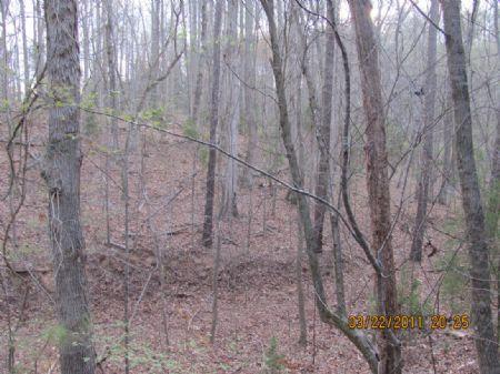Recreational Tract / Deer & Turkey : Union : Union County : South Carolina