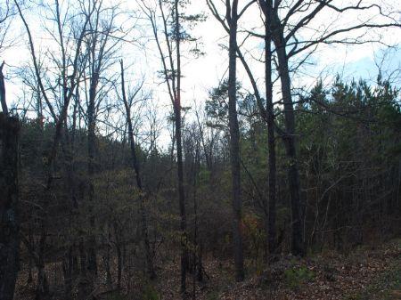 Small Hunting Tract Near Carlisle : Union : Union County : South Carolina