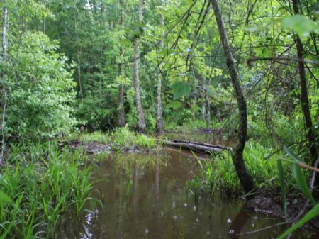 Secluded Hunting Or Recreational : Sandersville : Washington County : Georgia