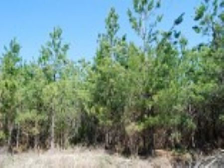 37-acre Hunting Tract : Union : Union County : South Carolina