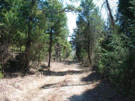Great Hunting Near State Park : Union : Union County : South Carolina