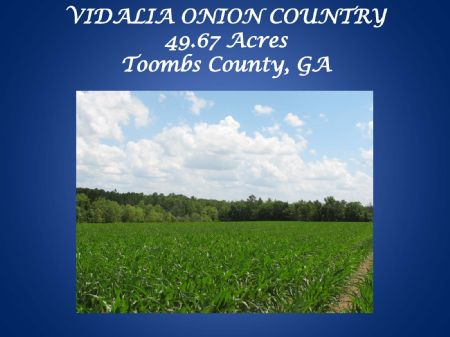 Vidalia Onion Country : Lyons : Toombs County : Georgia