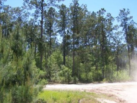 455 Ac Off Tom Marsh Road : Livingston : Polk County : Texas