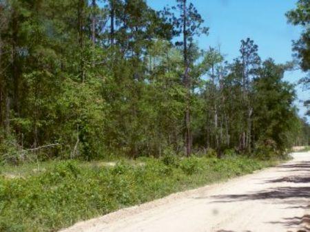 475 Ac Off Tom Marsh Road : Livingston : Polk County : Texas
