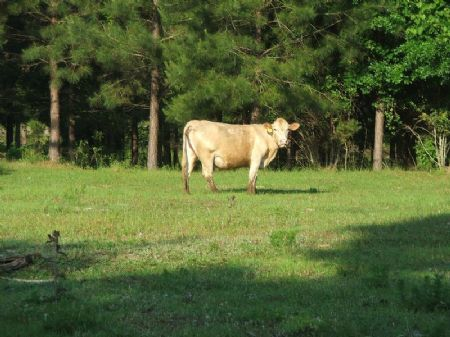 72 Acre Farm : Marion : Perry County : Alabama
