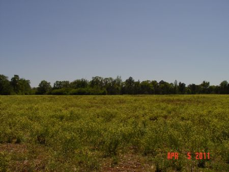 80 Acres Excel : Excel : Monroe County : Alabama