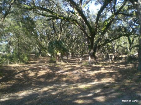 Thunder Ranch - 154 Acres : Anthony : Marion County : Florida