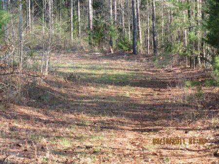 88-acre Timberland / Recreational : Gaffney : Cherokee County : South Carolina