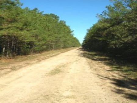 530 Ac Off Tom Marsh Road : Livingston : Polk County : Texas