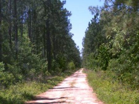 507 Ac Off Tom Marsh Road : Livingston : Polk County : Texas