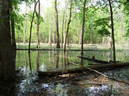 40+/- Acres On Dumond Lake : Tichnor : Arkansas County : Arkansas