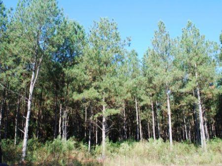 204 Acres On Mill Creek : Jonesville : Union County : South Carolina