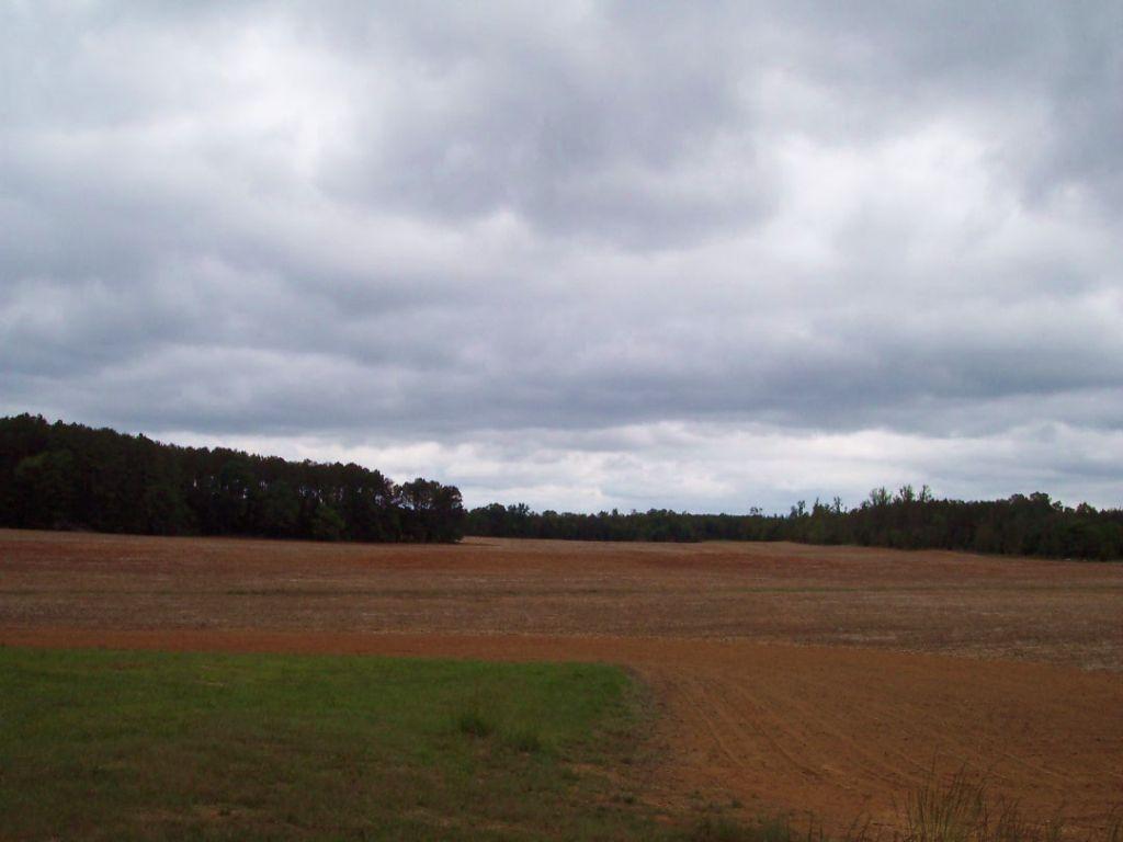209.26+/- Acres Open Land & Wooded : Aragon : Bartow County : Georgia