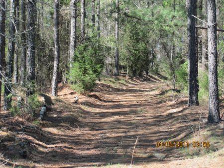 263 Acres Timberland / Reactional : Gaffney : Cherokee County : South Carolina