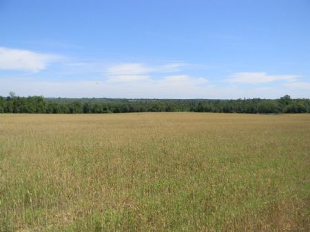 190 Hunting Paradise : Brantley : Coffee County : Alabama