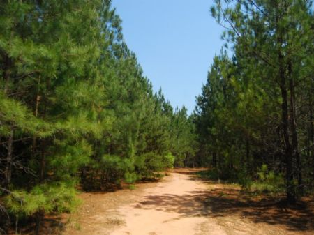 766 Acres Of Timberland : Cross Anchor : Spartanburg County : South Carolina