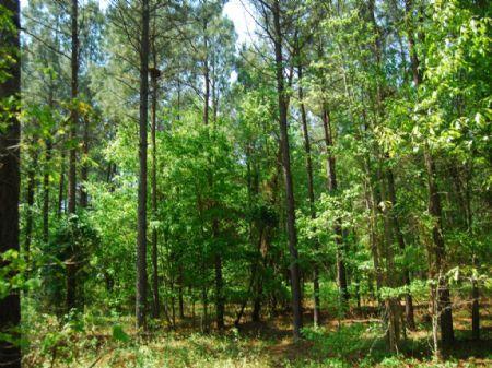 45-acre Recreational Tract : Cross Anchor : Spartanburg County : South Carolina