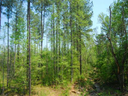 46-acre Recreational Tract : Cross Anchor : Spartanburg County : South Carolina