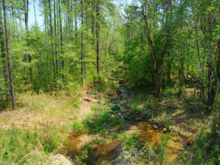 93-acre Timber / Recreational Tract : Cross Anchor : Spartanburg County : South Carolina