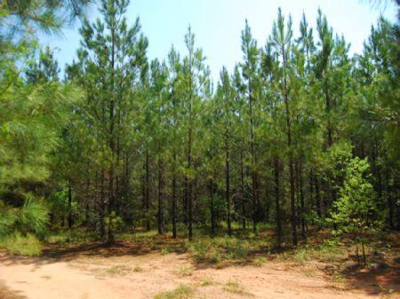 65-acre Recreational / Timber Tract : Cross Anchor : Spartanburg County : South Carolina