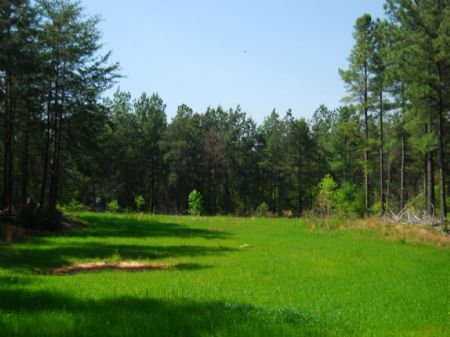 58-acre Timber / Recreational Tract : Cross Anchor : Spartanburg County : South Carolina