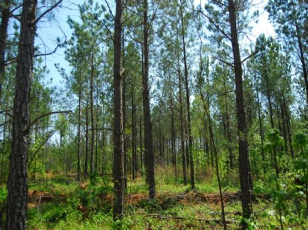 49 Acre Timberland Tract : Cross Anchor : Spartanburg County : South Carolina