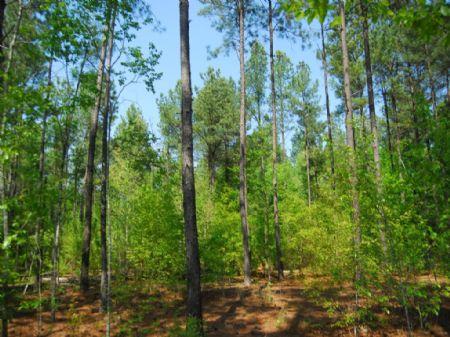 40 Acre Recreational Tract : Cross Anchor : Spartanburg County : South Carolina
