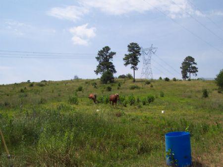 19+/- Ac. Fenced Pasture / Horses : Adairsville : Gordon County : Georgia