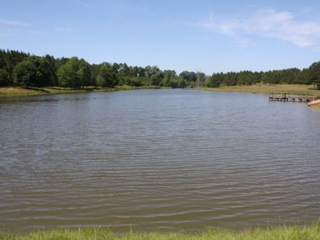 Paradise - 133 +/- Acres & Lake : Luverne : Crenshaw County : Alabama