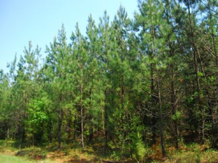 66 Acre Timberland Tract : Cross Anchor : Spartanburg County : South Carolina