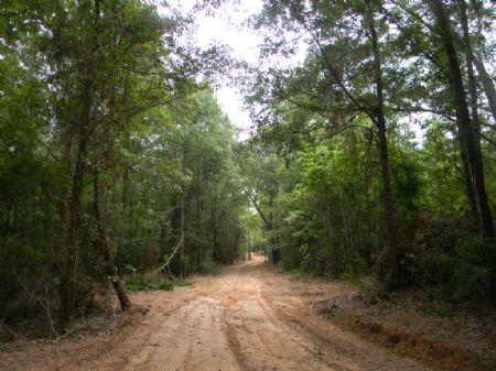 40 Acres : Autaugaville : Autauga County : Alabama
