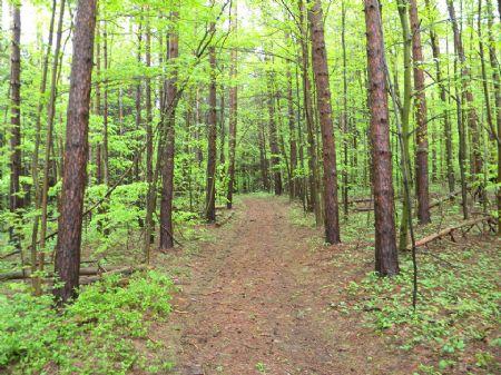 83+ Acres Woodland Stream : Caroline : Tompkins County : New York