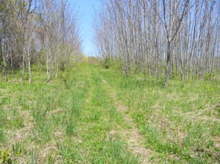 52 Acres Farmland Woods Pond : Mcgraw : Tompkins County : New York