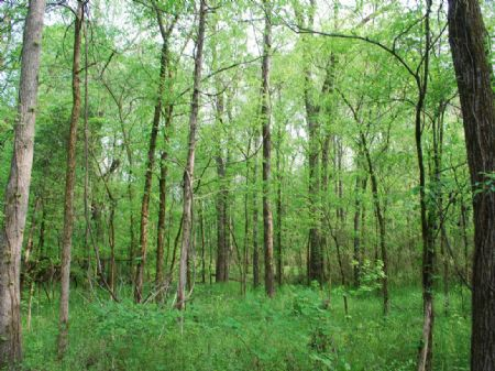 847 Acre Timberland Tract : Chester : Chester County : South Carolina