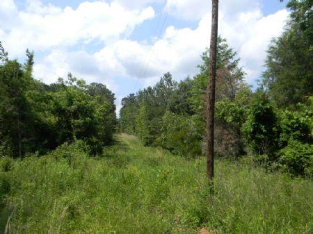 83 Acres : Davenport : Montgomery County : Alabama