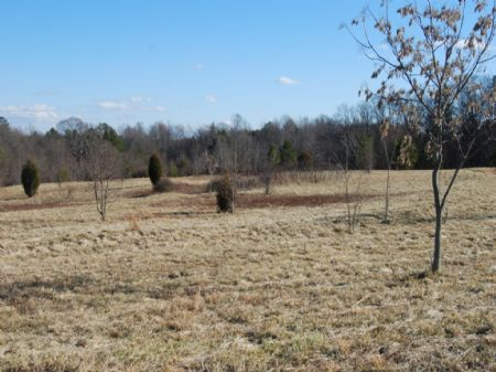 6 Acres Perfect For Horses Or Farm : Chesnee : Spartanburg County : South Carolina