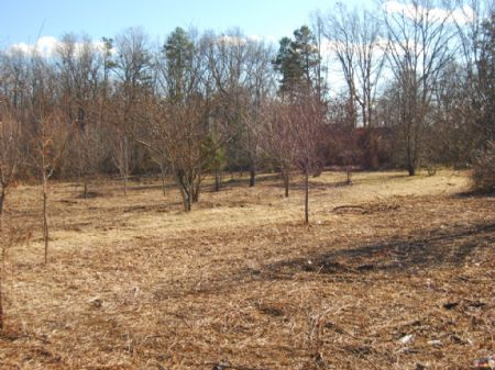 12 Acres In Chesnee Neighborhood : Chesnee : Spartanburg County : South Carolina