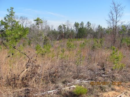 National Forest Hunting Hideaway : Union : Union County : South Carolina