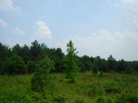 17.8 Acres : Cooley Springs : Spartanburg County : South Carolina