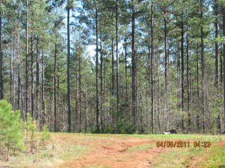 390 Acre Recreational / Timberland : Gaffney : Cherokee County : South Carolina