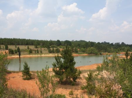 Beautiful Homesite : Brundidge : Pike County : Alabama